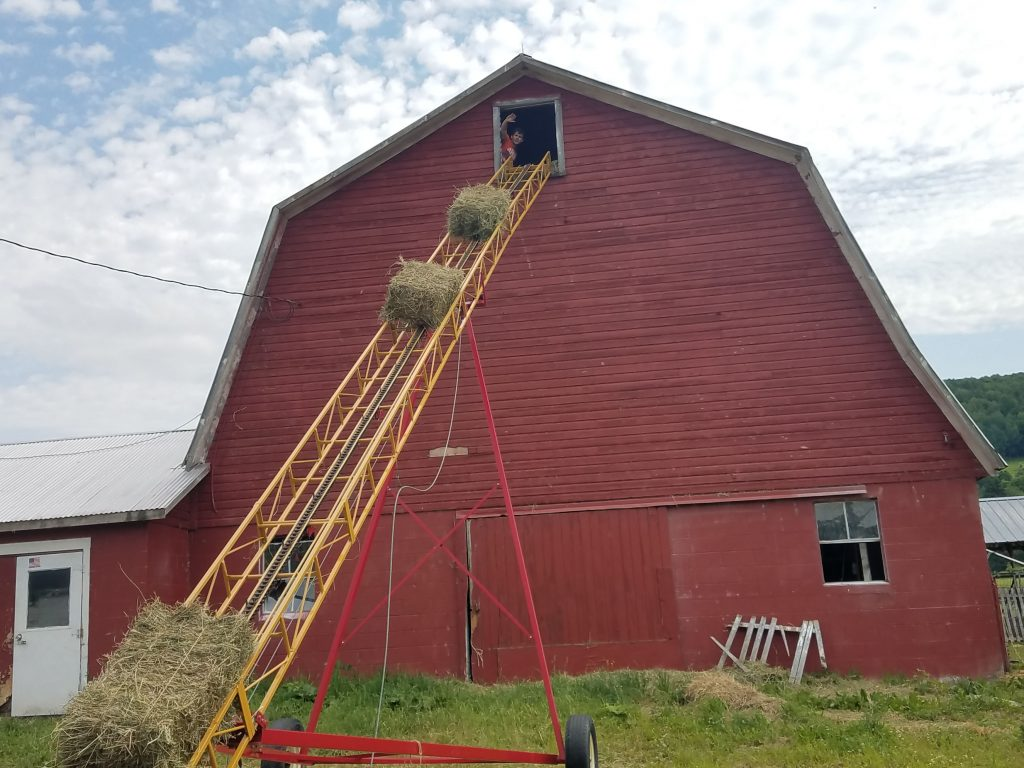 Hay going up the hay elevator into the barn
