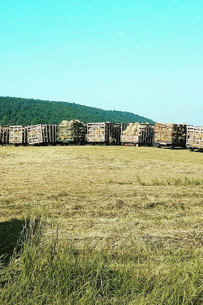 square bales of hay in wagons
